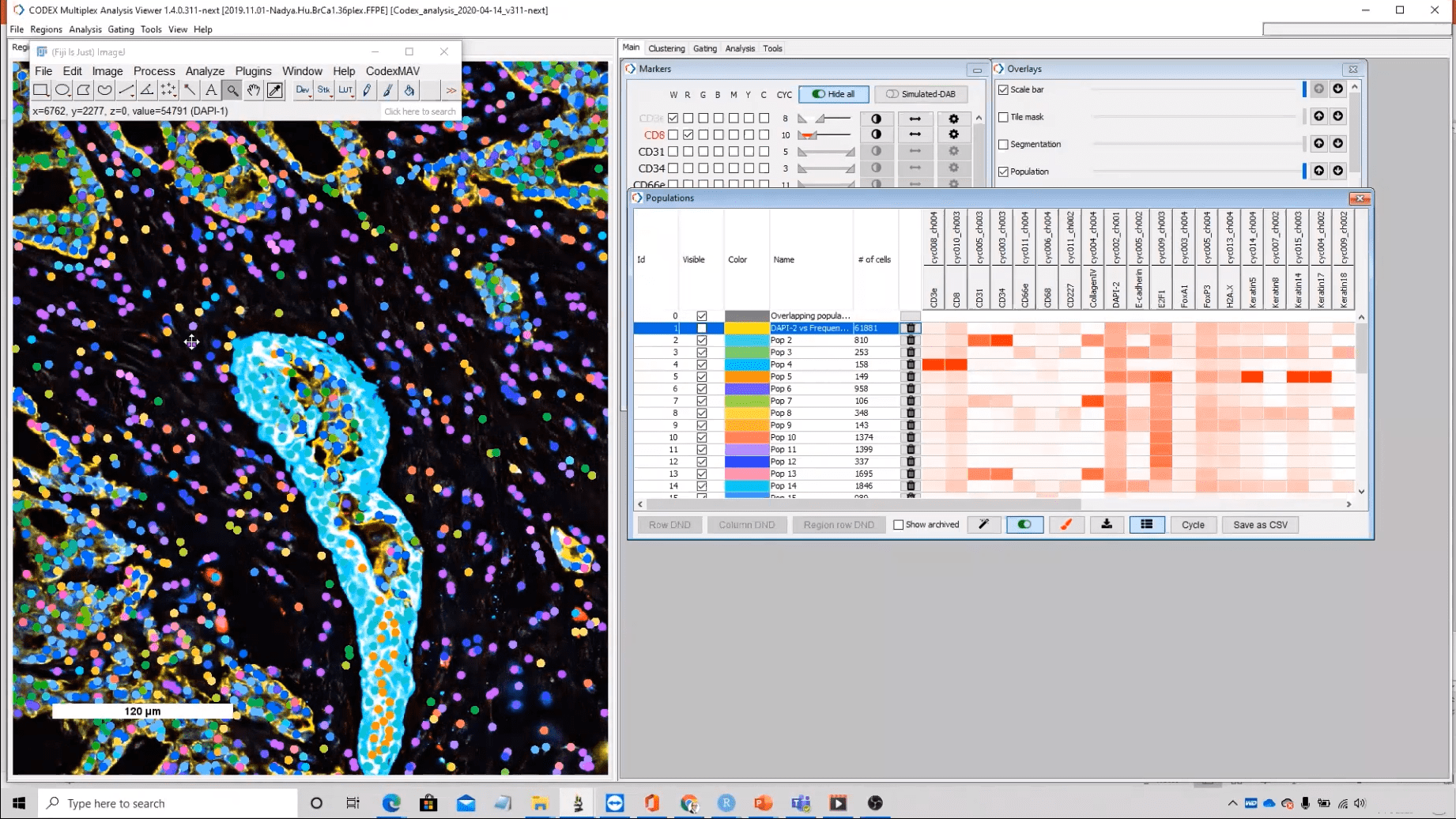 Clusters visualized on tissue image in MAV